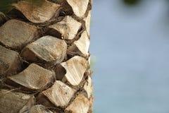 tät palmträd upp Arkivfoto