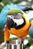 tät papegoja upp Arkivfoto