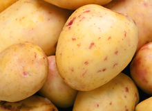 tät potatis upp Royaltyfria Foton