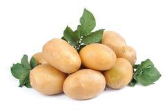 tät potatis upp royaltyfria bilder