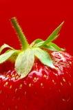 tät röd mogen jordgubbe för bakgrund upp royaltyfri bild