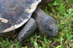 tät sköldpadda upp Arkivfoton