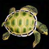 tät sköldpadda upp royaltyfria foton