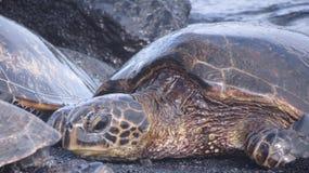 tät sköldpadda upp Royaltyfri Bild