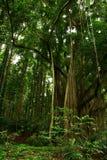 tät skog arkivfoto