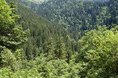 tät skog royaltyfri bild