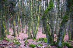 Tät skog Arkivfoton