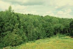 Tät skog för landskap Royaltyfri Bild