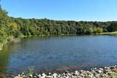 Tät skog framme till den blåa sjön Royaltyfri Bild