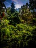 Tät skog i dalen under en kulle arkivfoto