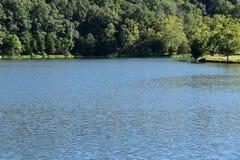 Tät skog i flont till den blåa sjön på sommar Royaltyfri Foto