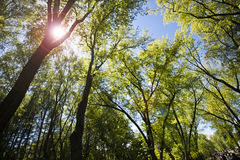 Tät skog mot den blåa himlen Royaltyfria Bilder