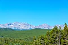 Tät skog och bergskedja fotografering för bildbyråer