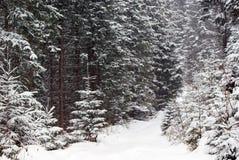 Tät snöig granskog och väg Royaltyfri Foto