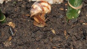 tät snail upp Arkivbilder
