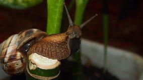 tät snail upp Royaltyfria Foton