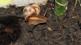 tät snail upp Royaltyfri Fotografi