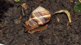 tät snail upp Royaltyfria Bilder