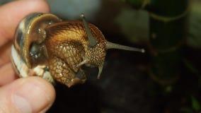 tät snail upp Royaltyfri Foto