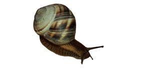 tät snail upp Arkivbild
