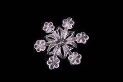tät snowflake upp white Arkivfoto