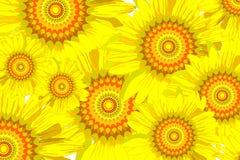 tät solros för bakgrund upp Fotografering för Bildbyråer