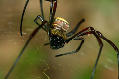 tät spindel upp Royaltyfria Bilder