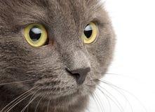 tät stående för katt upp royaltyfri bild