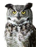 tät stor horned seende owl för kamera upp arkivbild