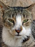 tät stray för katt upp fotografering för bildbyråer