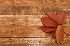 tät textur för brown upp trä abstrakt bakgrund Royaltyfri Bild