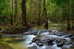Tät thailändsk djungel med den aktuella floden arkivfoton