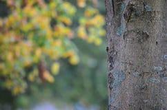 tät tree upp Royaltyfri Fotografi