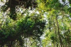 Tät tropisk djungel i Cambodja Royaltyfria Foton