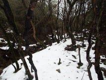 Tät vegetation av idegransträ loggar in strömmar i bygden Royaltyfri Fotografi