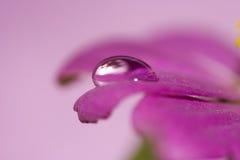 täta blommapetals pink upp Fotografering för Bildbyråer