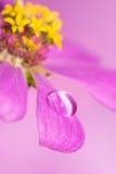 täta blommapetals pink upp Royaltyfri Fotografi