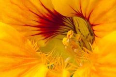 täta blommor fotograferar upp Arkivfoton