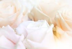täta blommor upp Arkivbilder