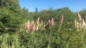 Täta busksnår av höga gräs i det nationella ekologiskt parkerar nära lagun arkivfilmer