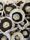 täta champinjoner upp Arkivbild