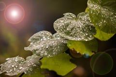 täta daggliten droppe gräs perfekt övre vatten för leafmorgonen Arkivfoto