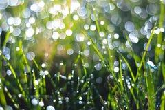 täta daggliten droppe gräs perfekt övre vatten för leafmorgonen Royaltyfria Foton