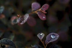 täta daggliten droppe gräs perfekt övre vatten för leafmorgonen Arkivbilder