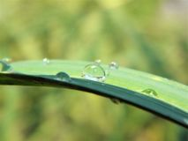 täta daggliten droppe gräs perfekt övre vatten för leafmorgonen arkivbild