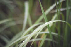 täta daggliten droppe gräs perfekt övre vatten för leafmorgonen Arkivfoton