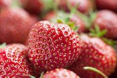 täta nya jordgubbar upp Royaltyfria Bilder