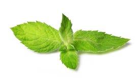 täta nya leaves mint upp Fotografering för Bildbyråer
