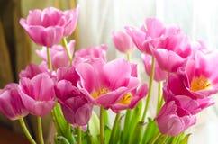 täta rosa tulpan upp Royaltyfri Fotografi