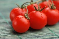 täta tomater upp Arkivfoto